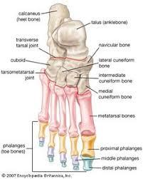 Knee Bony Anatomy Hand Bones Skeleton Anatomy Massage U0026 Anatomy Nerdiness