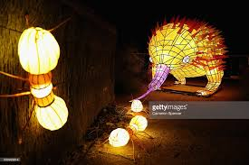 Taronga Zoo Christmas Party - giant animal lanterns light up taronga zoo for vivid sydney photos