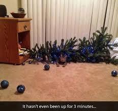 Christmas Tree Meme - wreck the halls cats destroying christmas trees cuteness
