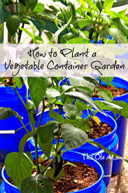 how to plant a vegetable container garden this ole mom