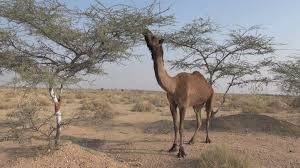 thar desert animals rajasthan thar desert house stock video footage videoblocks