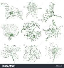 flower sketches collection stock vector illustration 81021586