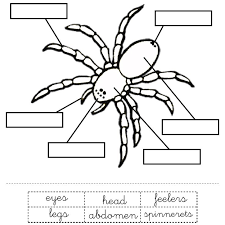 parts of a spider for kids yahoo image search results