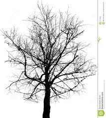 black tree stock photo image 4774600