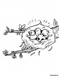 printable birds eggs hatching nest seasons spring coloring pages