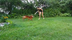 Dog In The Backyard by Slow Motion A Young Couple Jogging With A Dog In The Forest Stock