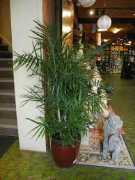 Best Houseplants Best Houseplants That Purify The Air Stethnews