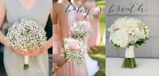 baby s breath bouquets baby s breath harley mae
