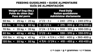 labrador puppy diet plan u2013 dogs our friends photo blog