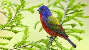 beautiful birds wallpapers hd wallpapers high quality wallpapers