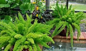 Vegetable Container Garden by Spectacular Container Gardening Ideas Southern Living Container