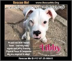 rescue a boxer dog michigan boxer rescue u2015 adoptions u2015 rescueme org