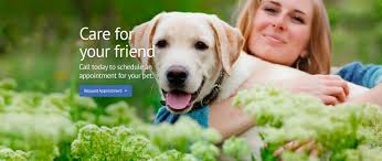 vets in singapore pet clinic singapore animal ark veterinarian group