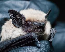slideshow everything you didn u0027t know about bats in los angeles