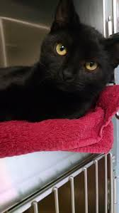cape may county animal shelter u0026 adoption center at petsmart in
