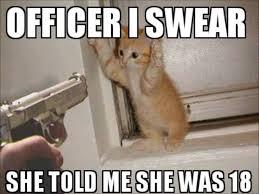 The Best Cat Memes - silly cat memes 9 funny kitties pinterest funny cat memes