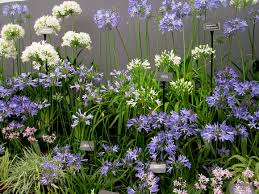 Small Garden Bed Design Ideas Small Flower Bed Ideas Trendy Innovative Small Flower Garden