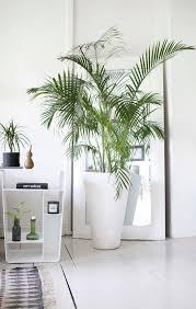 home decor with plants 315 best plants for home decor images on pinterest plant pots