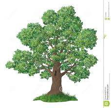 White Oak Leaf Oak Tree And Green Grass Stock Image Image 31485991