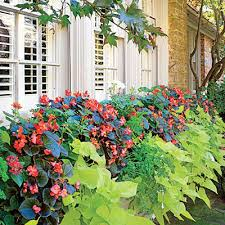 Flowers For Window Boxes Partial Shade - 159 best window boxes images on pinterest window boxes flowers