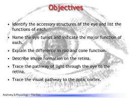 Eye Anatomy And Physiology The Eye Ppt Video Online Download