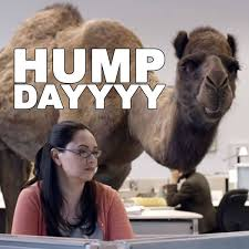 Hump Day Camel Meme - images tagged with hump day for facebook and whatsapp sendscraps