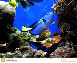 finding nemo u0027s dory royalty free stock photos image 357368