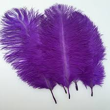 purple feather purple feather