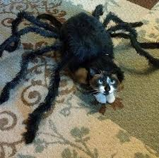 Halloween Costumes Cats 30 Awesome Dog Cat Halloween Costumes Dogtime