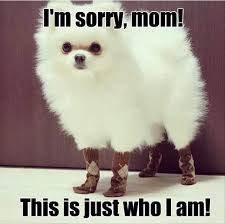 Dog Mom Meme - i m sorry mom this is just who i am dog viral viral videos