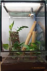 crested geckos adrizoo en