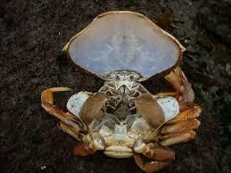 star fish anatomy image collections learn human anatomy image