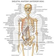 Human Anatomy Woman Interactive Case Studies And The Female Human Body Scenarios