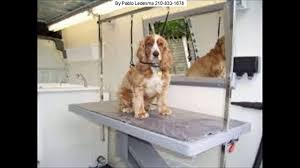 mobile dog grooming near me san antonio 210 908 5449 youtube