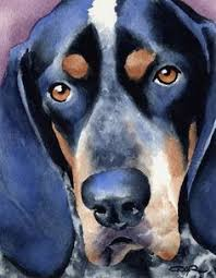 bluetick coonhound with cats boone the bluetick coonhound dogs pinterest more bluetick
