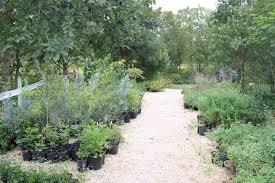 plants native to texas rock oak deer medina garden nursery