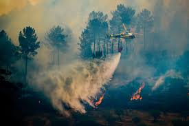 Type 1 Wildfire Definition by Portugal Forest Fires Worsen Fed By Poor Choices And Inaction