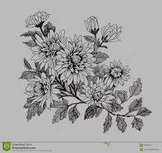 beautiful monochrome black and white flower isolated hand drawn