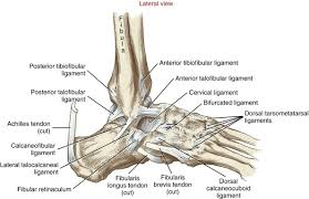 Anterior Tibiofibular Ligament Injury Ankle And Foot Clinical Gate