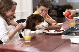 Dogs At Dinner Table People Food For Puppies A Guide To Feeding Table Scraps