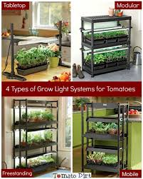 types of grow lights choosing a grow light system for growing tomatoes from seed