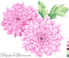 two chrysanthemum tattoo designs photo 3 photo pictures and