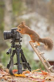 i shoot squirrels in my backyard and i can almost make a living
