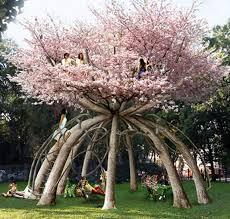 cherry tree house hotelroomsearch net