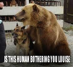 Funny Meme Desktop Backgrounds - bear and dog funny meme desktop backgrounds memes pinterest