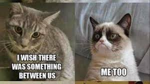 Birthday Memes For Facebook - top funny cat memes facebook daily funny memes