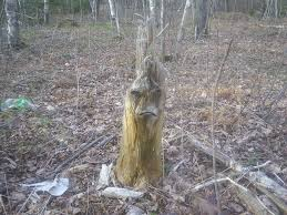 sad tree is sad