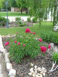 Landscape Flower Garden by Here Are Pics Of My Flower Beds Landscape Peony Rose Bushes
