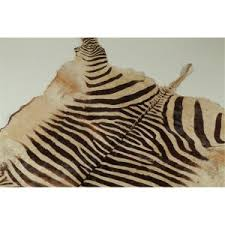 Genuine Zebra Rug Charming Fake Zebra Skin Rug Photo Inspiration Surripui Net