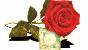 flowers red rose imaginary lovely fresh beautiful love
